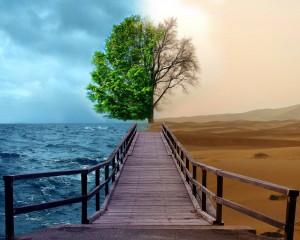 Half-Life-Tree-2048x2560