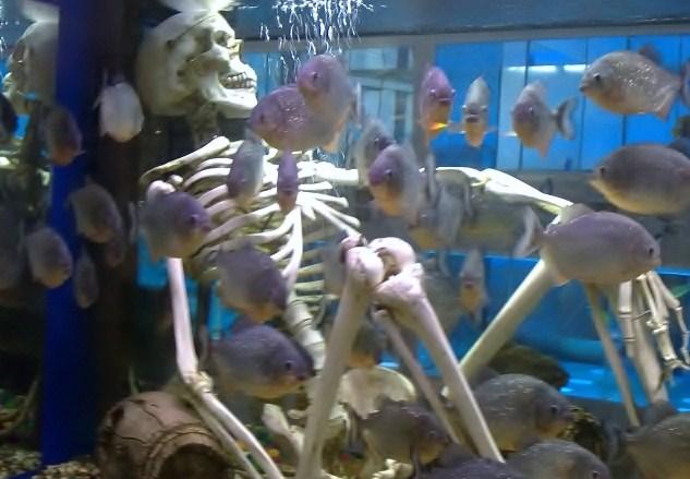 Скелет в аквариуме, вокруг рыбки