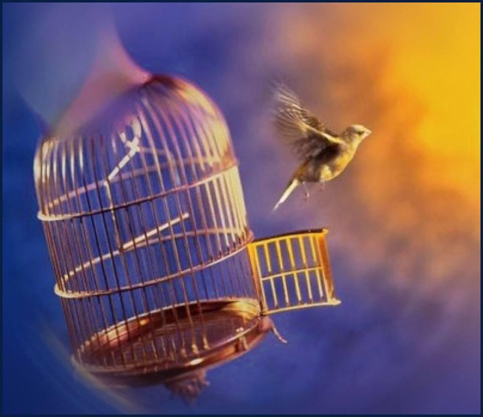 Птица вылетела из клетки, символ мечты, как избавления от хронической усталости