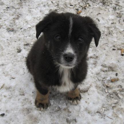 Маленький щенок на снегу жалобно смотрит
