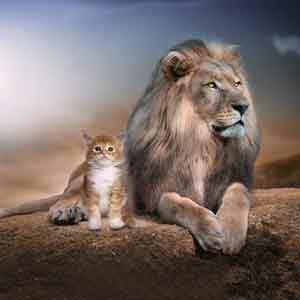 Логотип курса Лидерство и адаптивное управление - гордый лев и маленький котенок наравне
